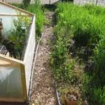 spring garden2