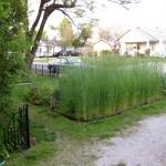 spring garden3